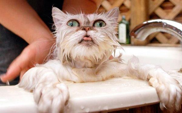 Стресс у кота после купания