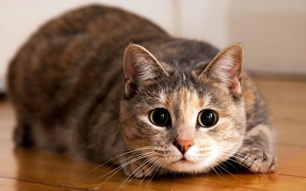Инстинкт самосохранения у кошки