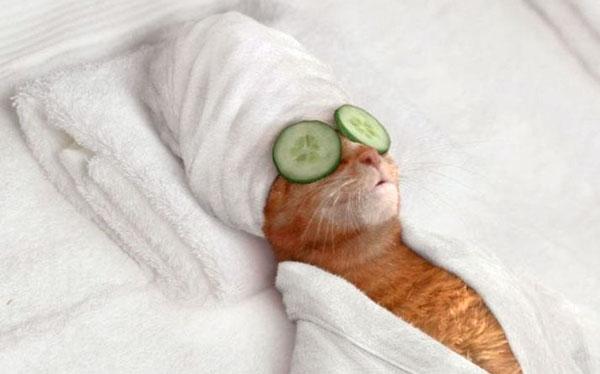 кошка с огуречной маской