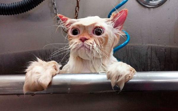 кот вылез из ванной