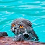 От чего кошки боятся воды: каковы причины этого страха