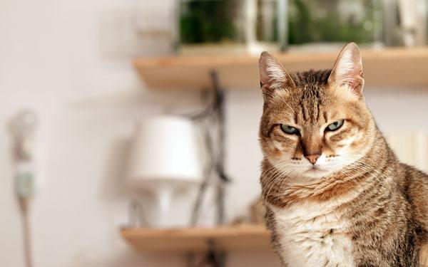 Почему люди пугают кошек огурцами