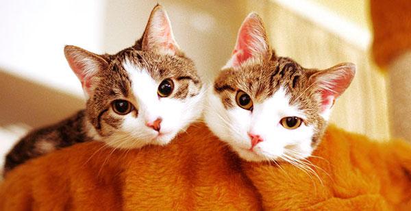 Сигналы для кошек в разных странах
