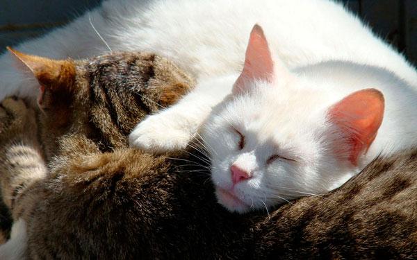 почему кошки мало спят