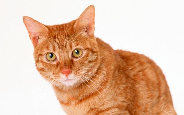 интересные клички для рыжих котов