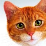 Как назвать рыжую кошку или кота: популярные клички и правила выбора имени