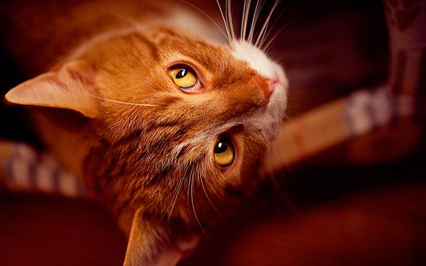 как назвать рыжую кошку