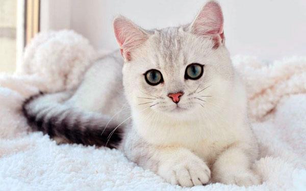 клички для кошек-девочек