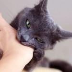 Кошачье поведение: почему кошки кусаются, когда их гладишь