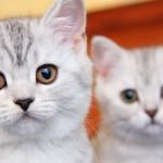Как назвать питомца: популярные русские имена для кошек и котов