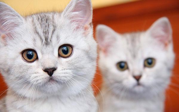 Русские имена для котов