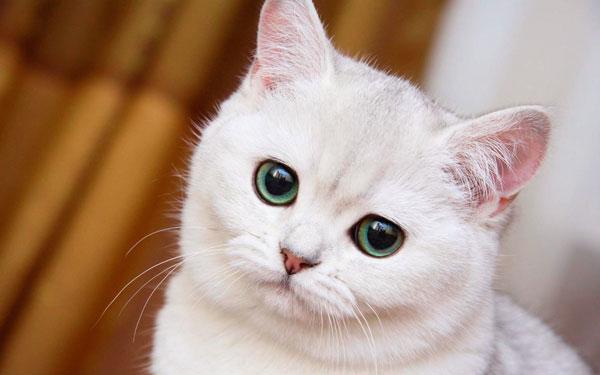 русские клички для котов