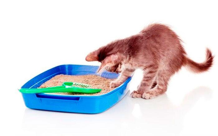 Как приучить кота к туалету
