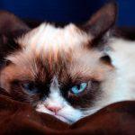 Патология нижнего отдела мочевыводящего аппарата у кошек